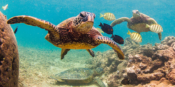 Unbelievably Easy Methods To Boost Your Sea Turtles